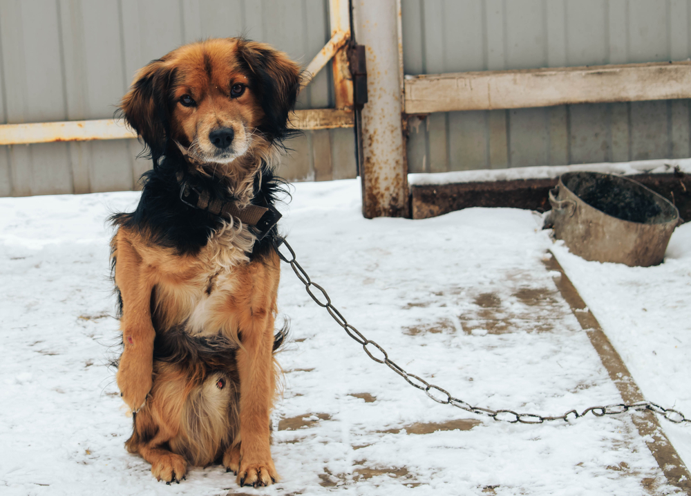 Dog tied outside in snow
