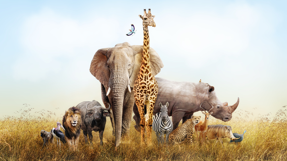 Wild African animals usually seen in zoos