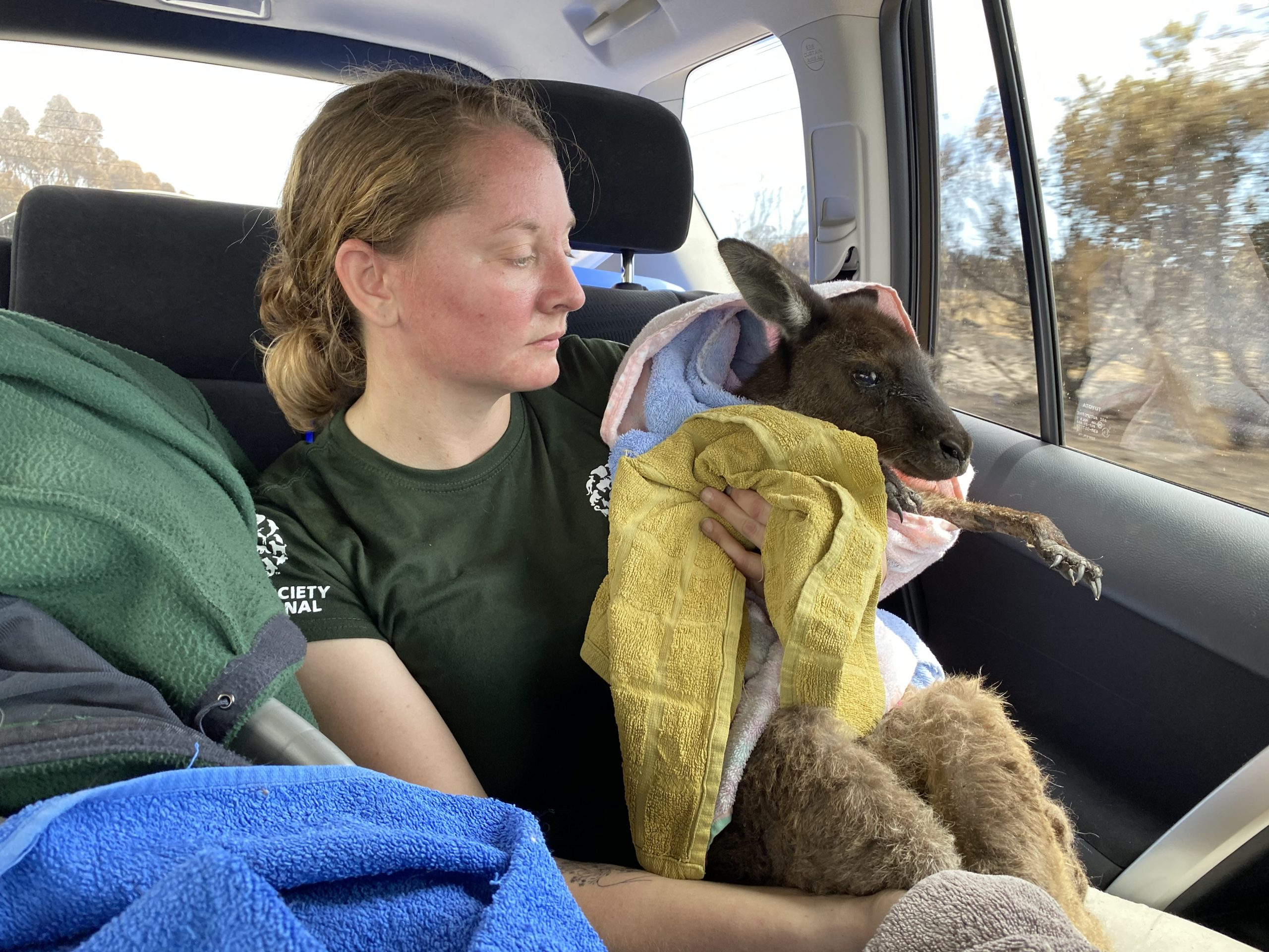 HSI rescue team with kangaroo saved from fires