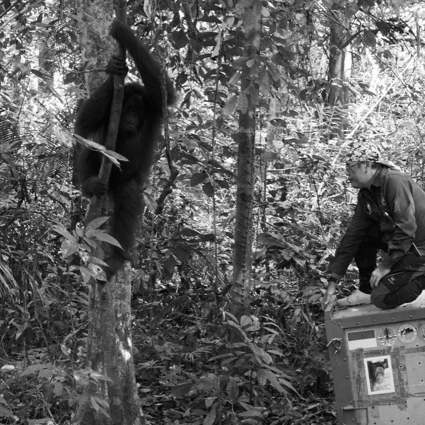 Jamartin releases orangutan