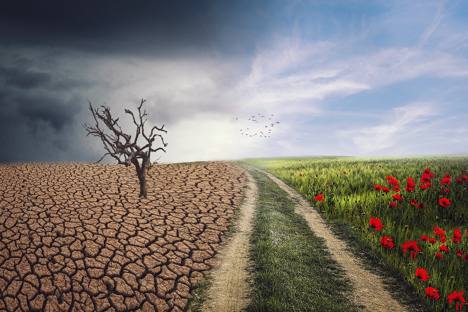 The connection between climate change, allergies, and mental health