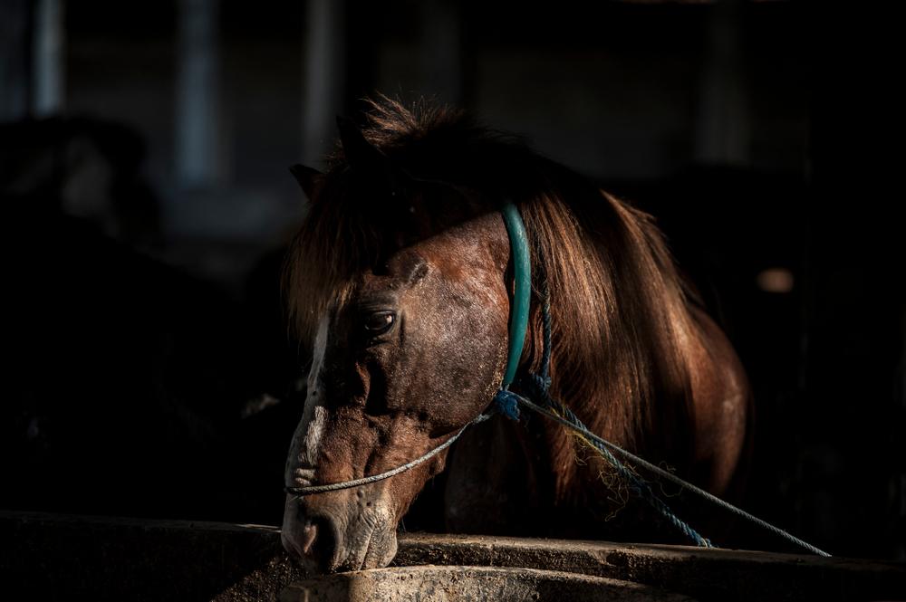 horse in slaughterhouse