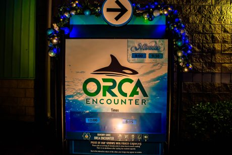 Seaworld orca encounters
