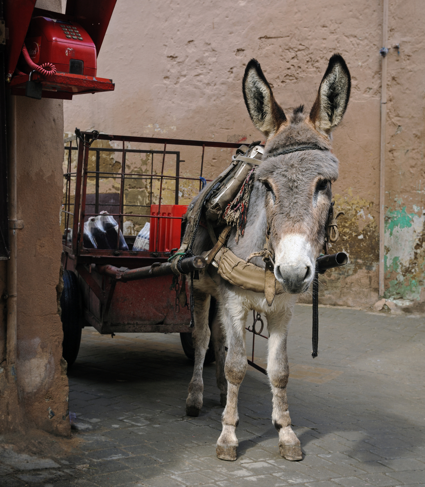 Donkey pulling cart in Morocco
