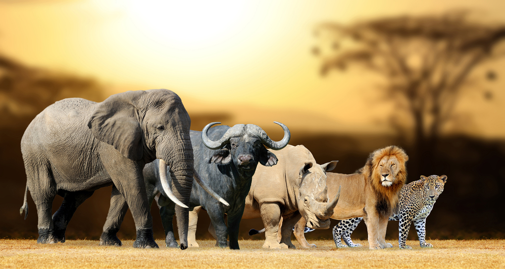 African animals often victims of trophy hunting