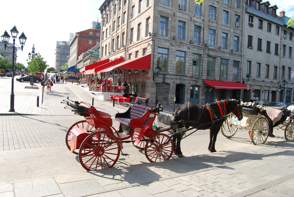 Horse carriage in Montreal