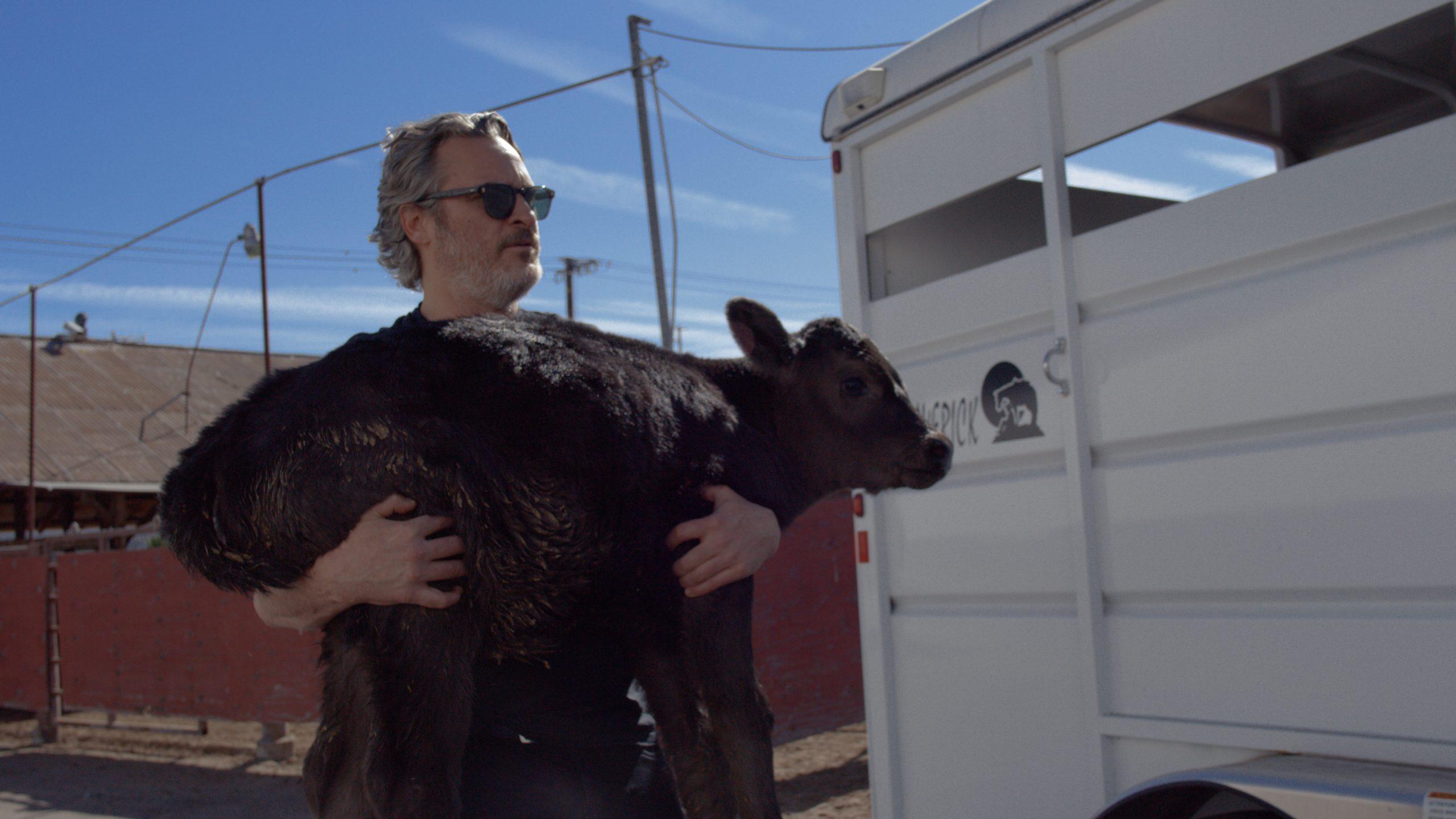 Joaquin Phoenix Cow