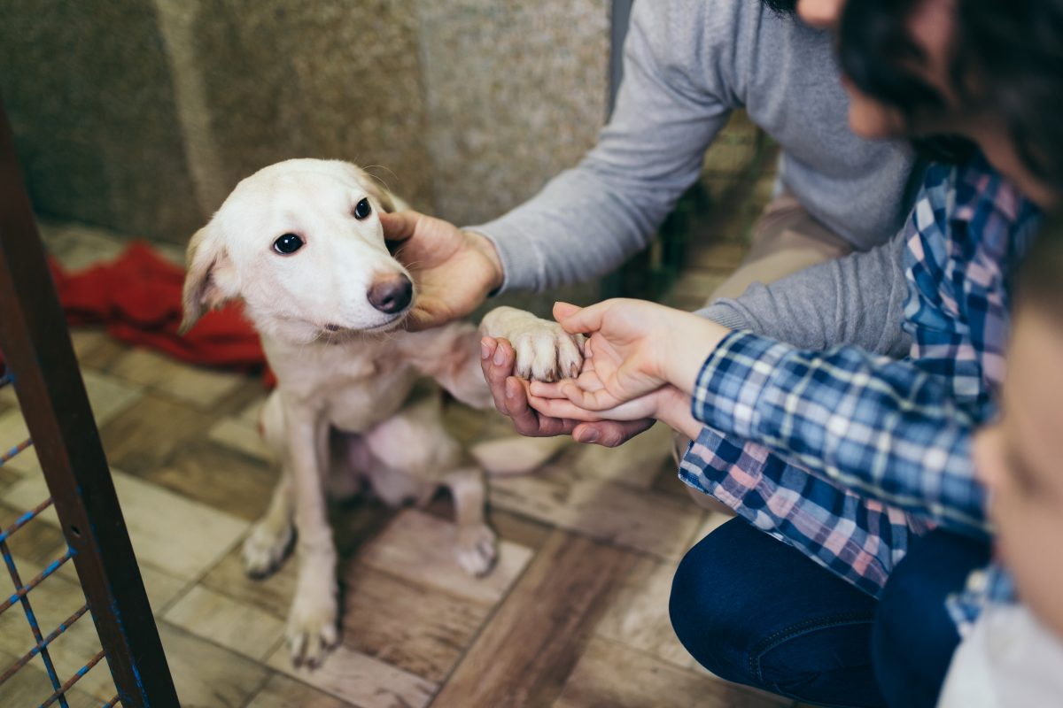 FDA Now Allows Lab Animals to be Adopted