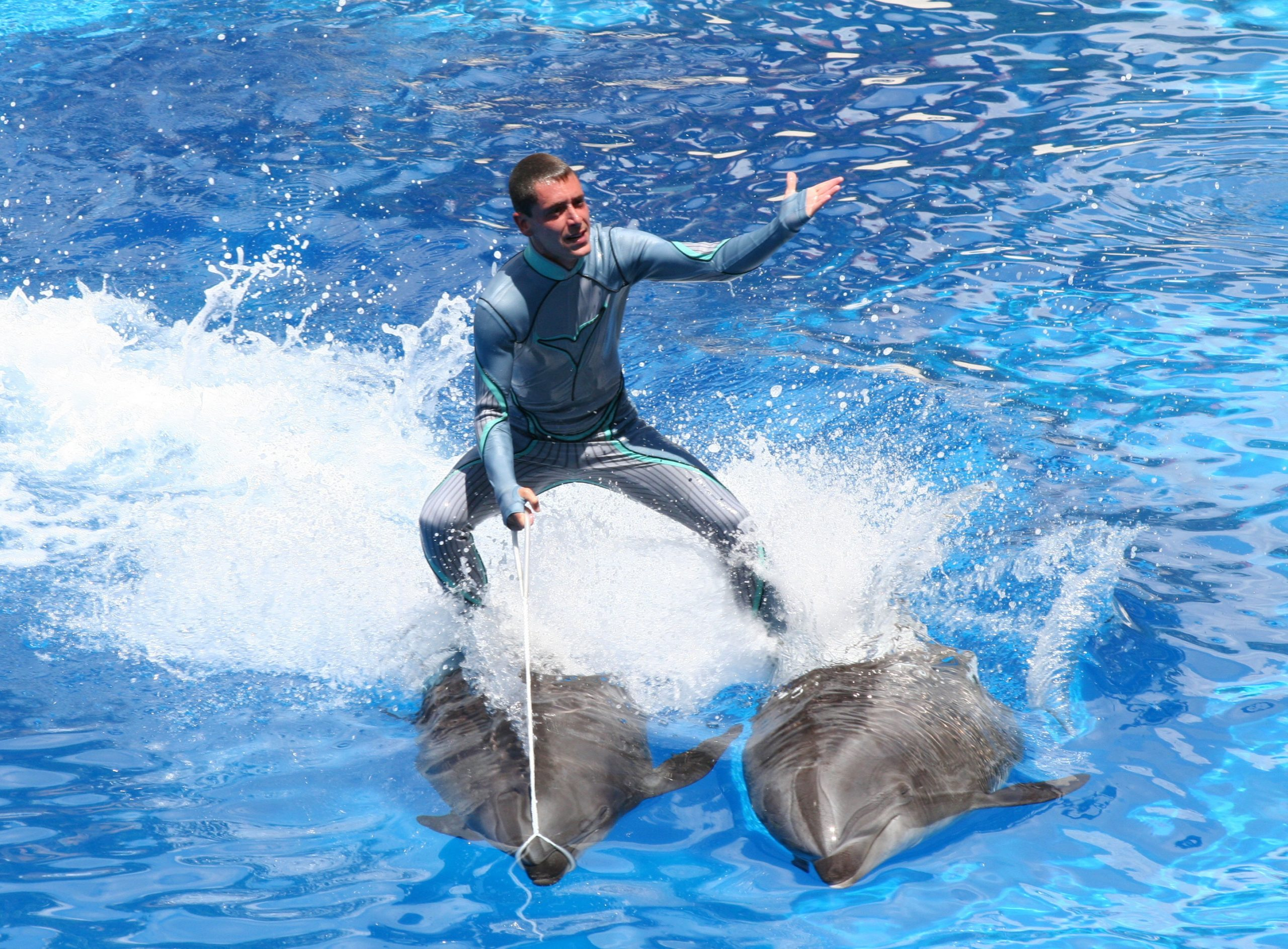 SeaWorld Ends Practice of Trainers Riding Dolphins