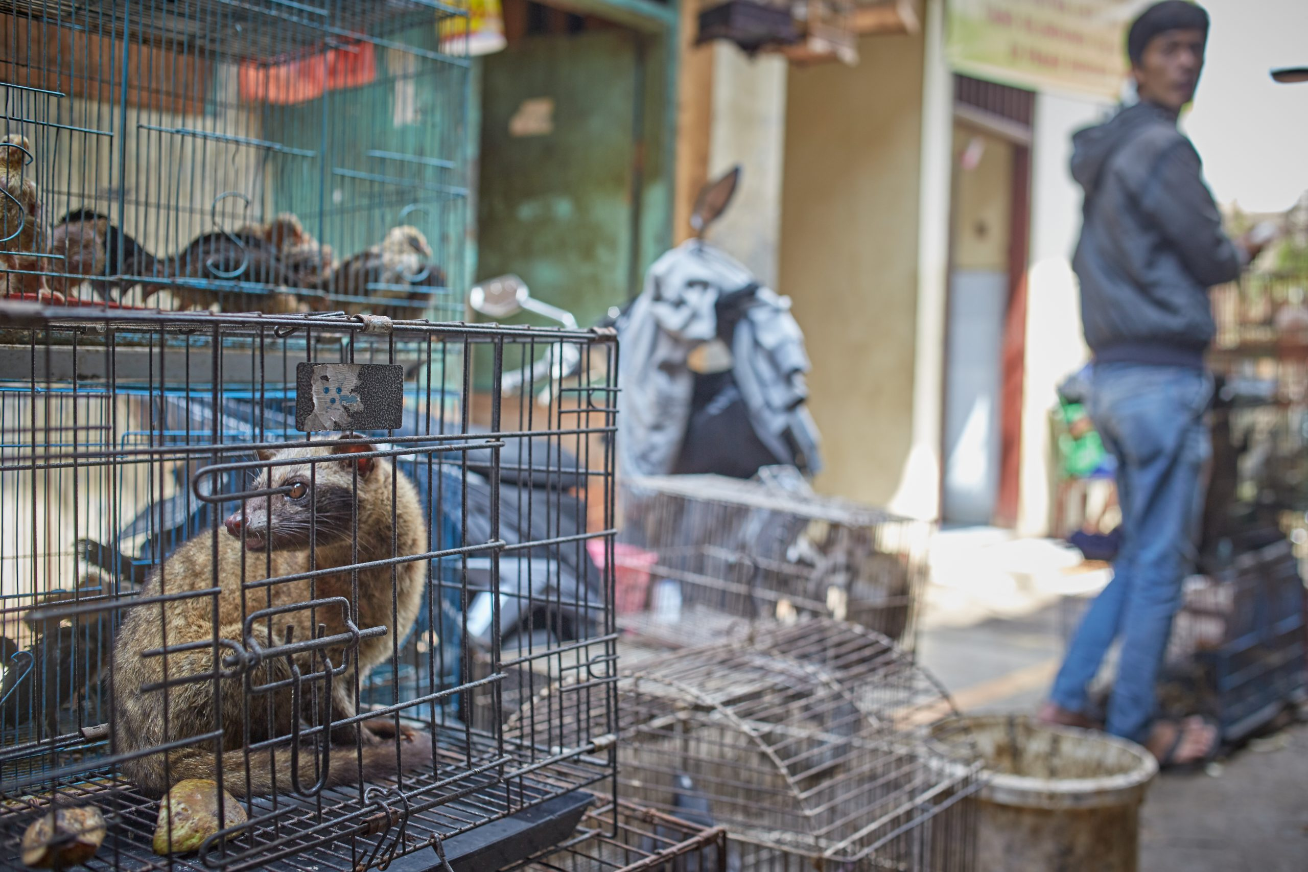 Exotic Animal Market