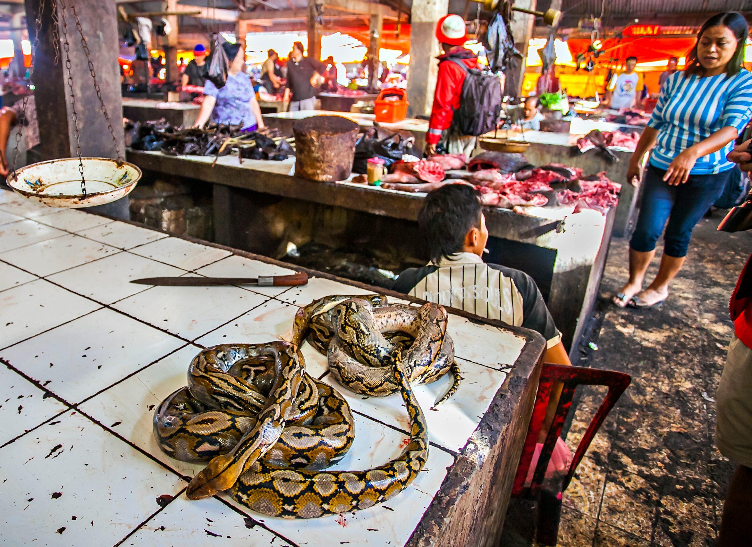 Tomohon market indonesia