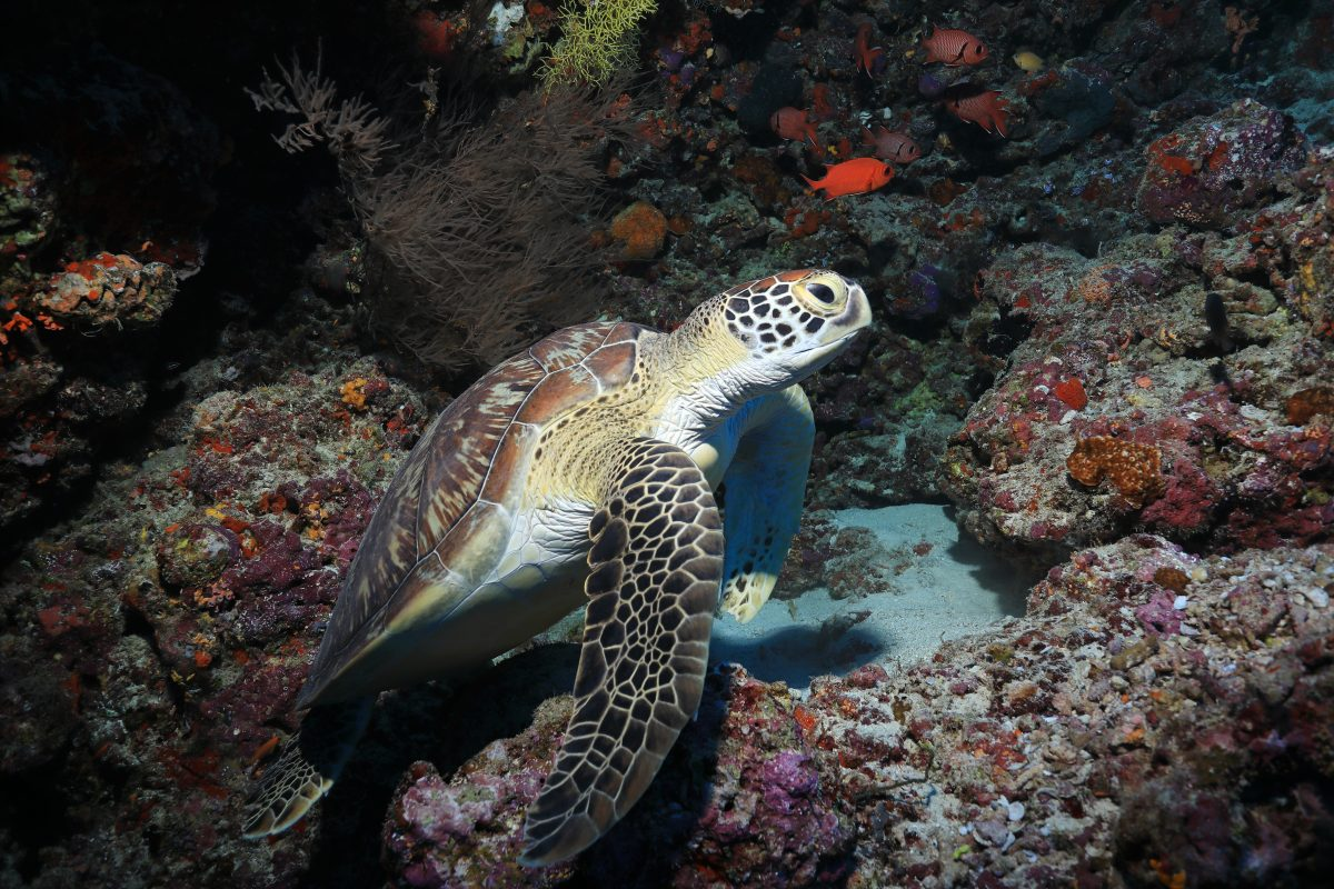 Sea Turtle in Recovery After Passing 100 Pieces of Plastic in Stool