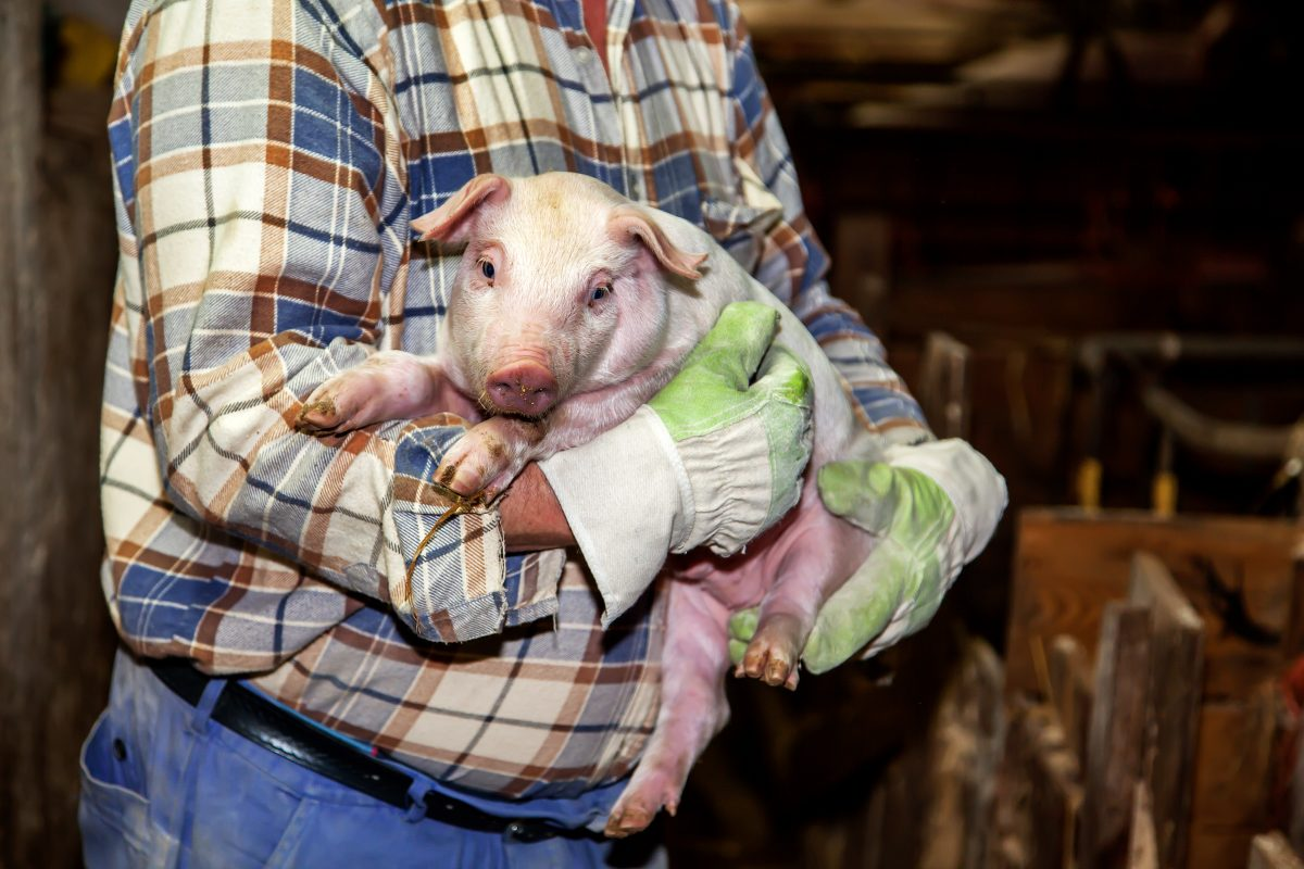USDA Ordered to Restore Previously Deleted Inspection Records, Finally We Can Hold them Accountable for Animal Welfare Violations!