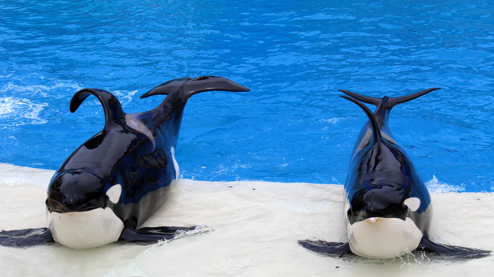 Petition: End Whale and Dolphin Captivity in the U.S.
