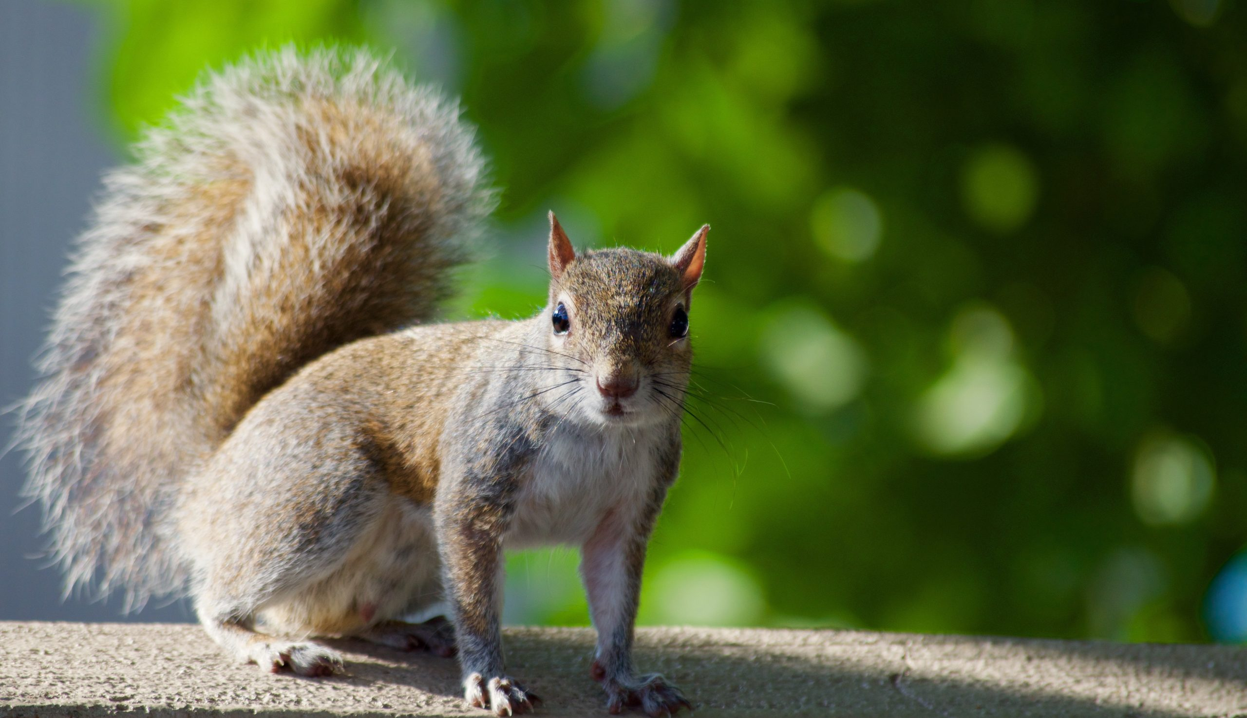 Squirrels in London are Using Plastic Waste to Build Nests