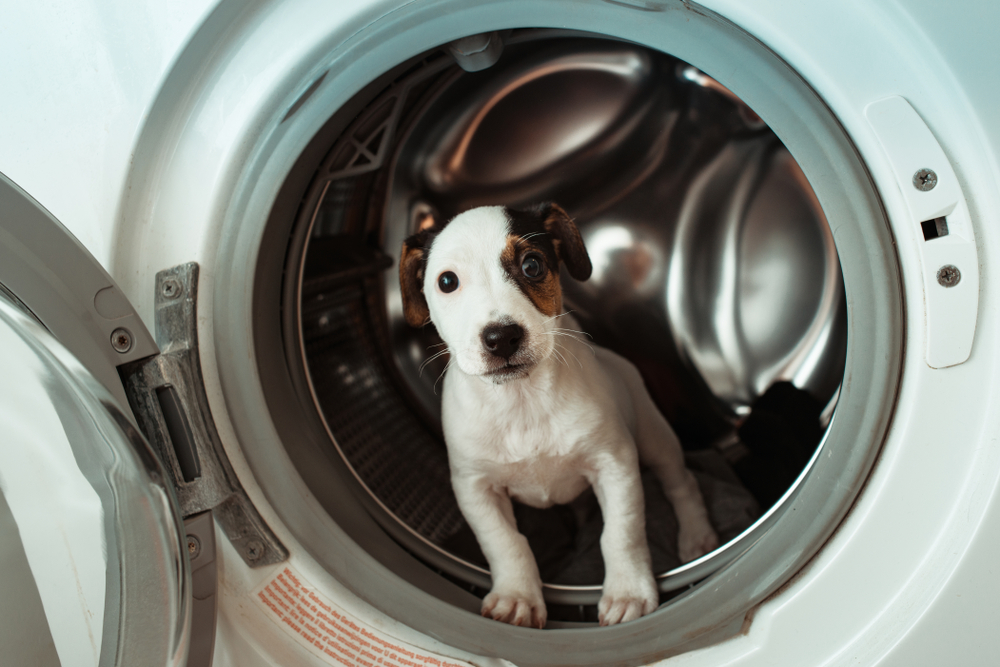 puppy in clothes dryer