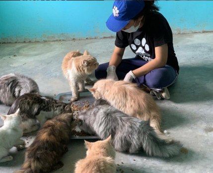 rescuer with cats