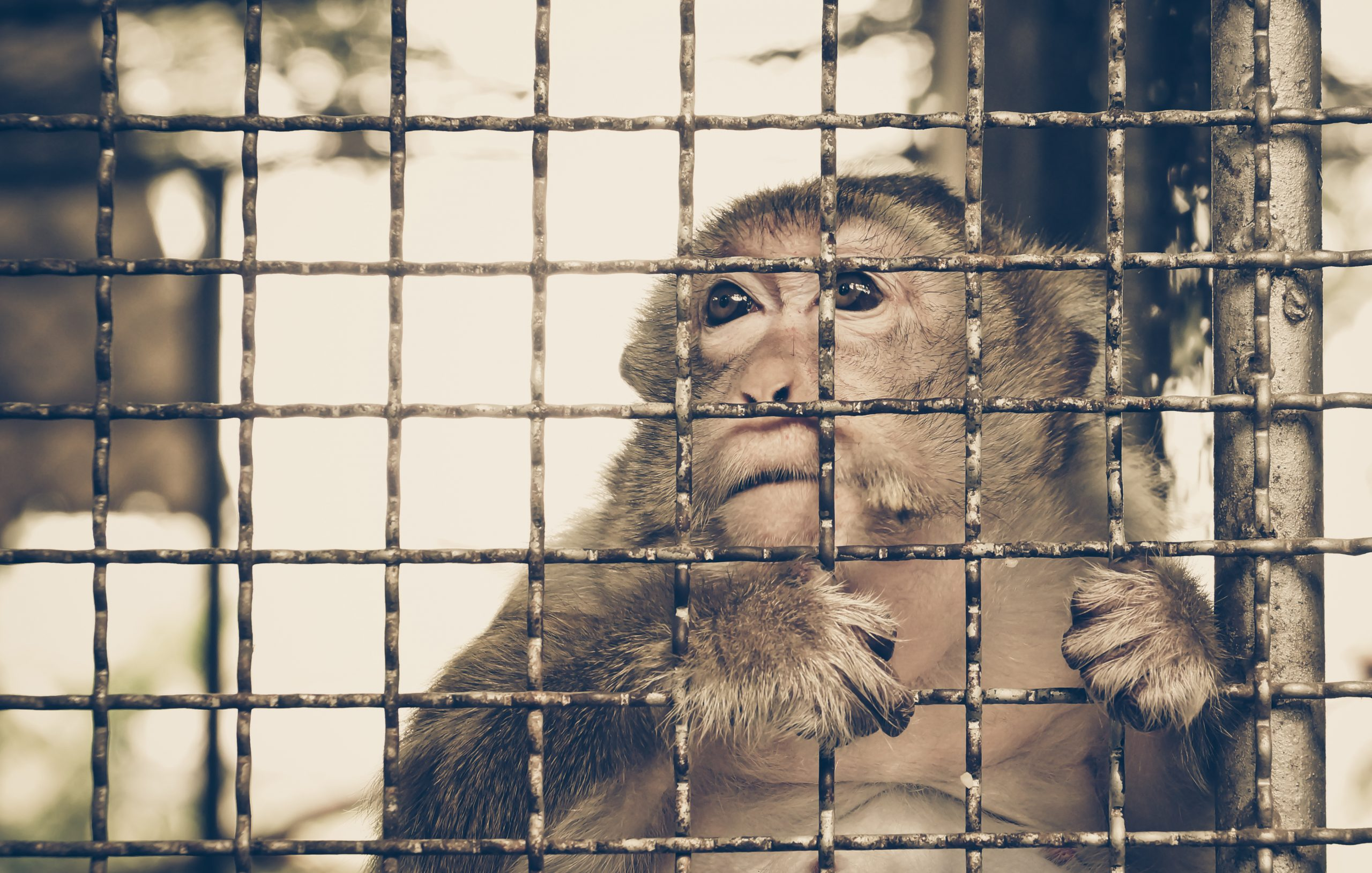 Petition: Coronavirus Update: Vietnam Bans Wildlife Trade
