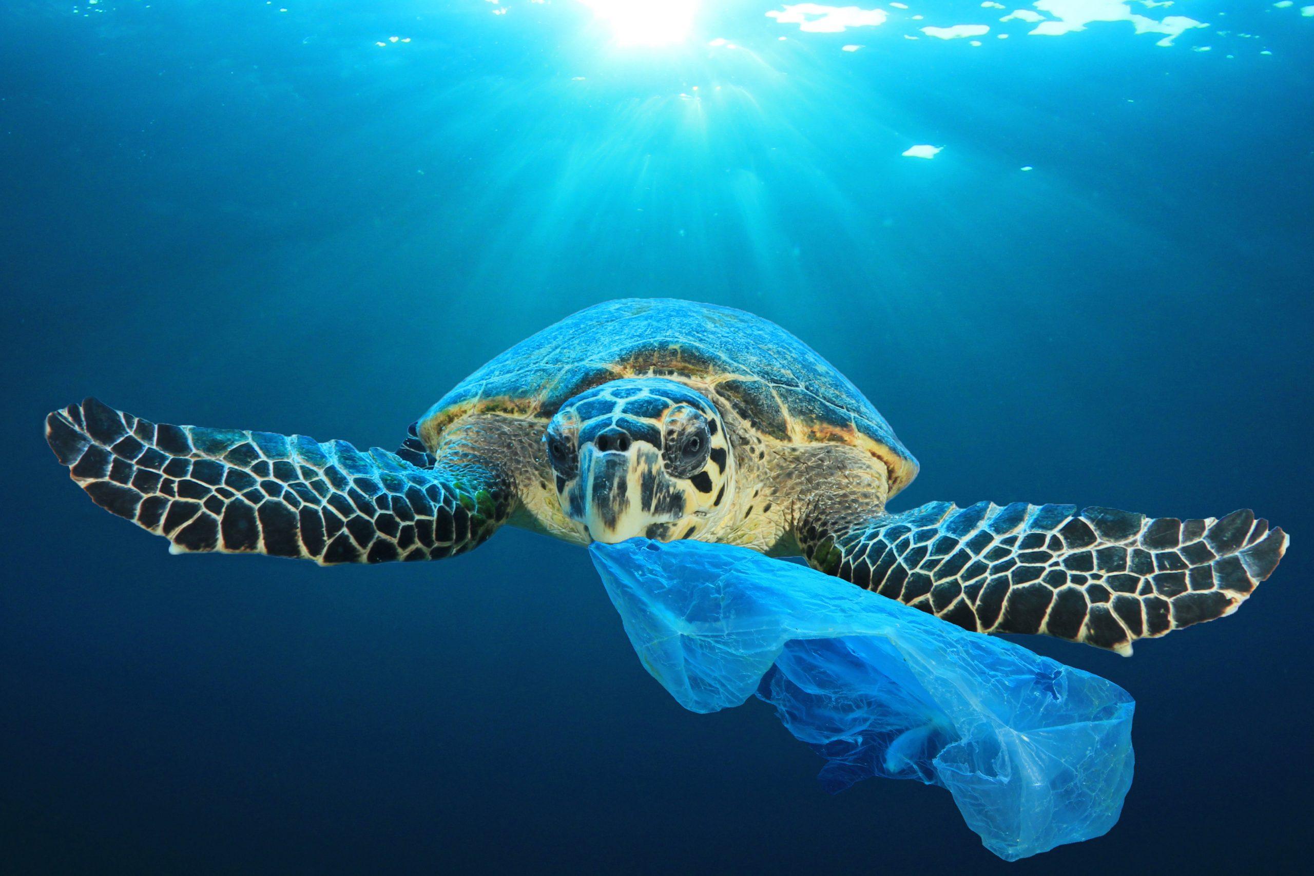 Sea Turtle with Plastic