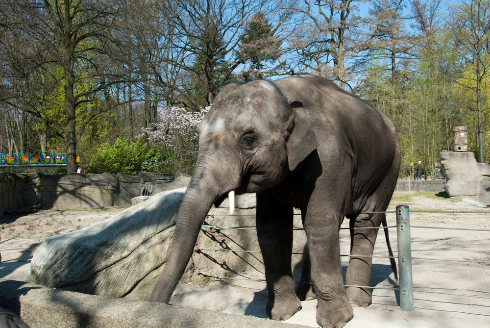 Petition: Boycott these 10 Worst Zoos for Elephants in North America!