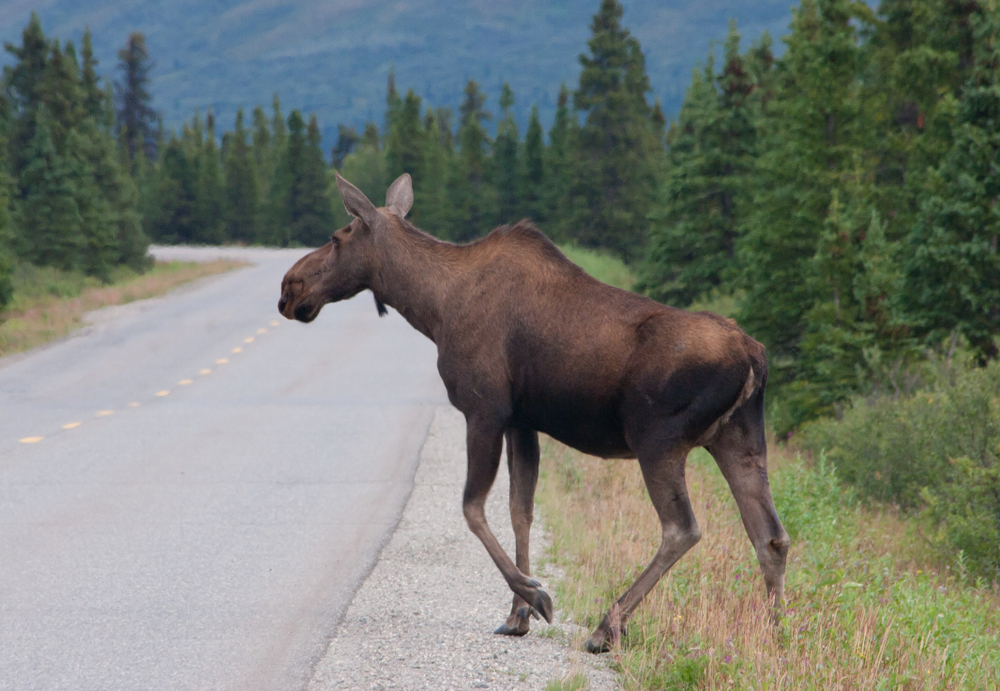 Petition: Support Bill to Protect Wildlife From Being Killed by Cars on Roads and Highways