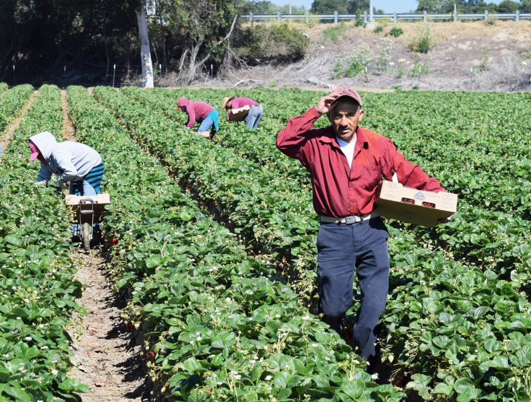 Concerns Grow as Farmworkers Continue to Work During Coronavirus