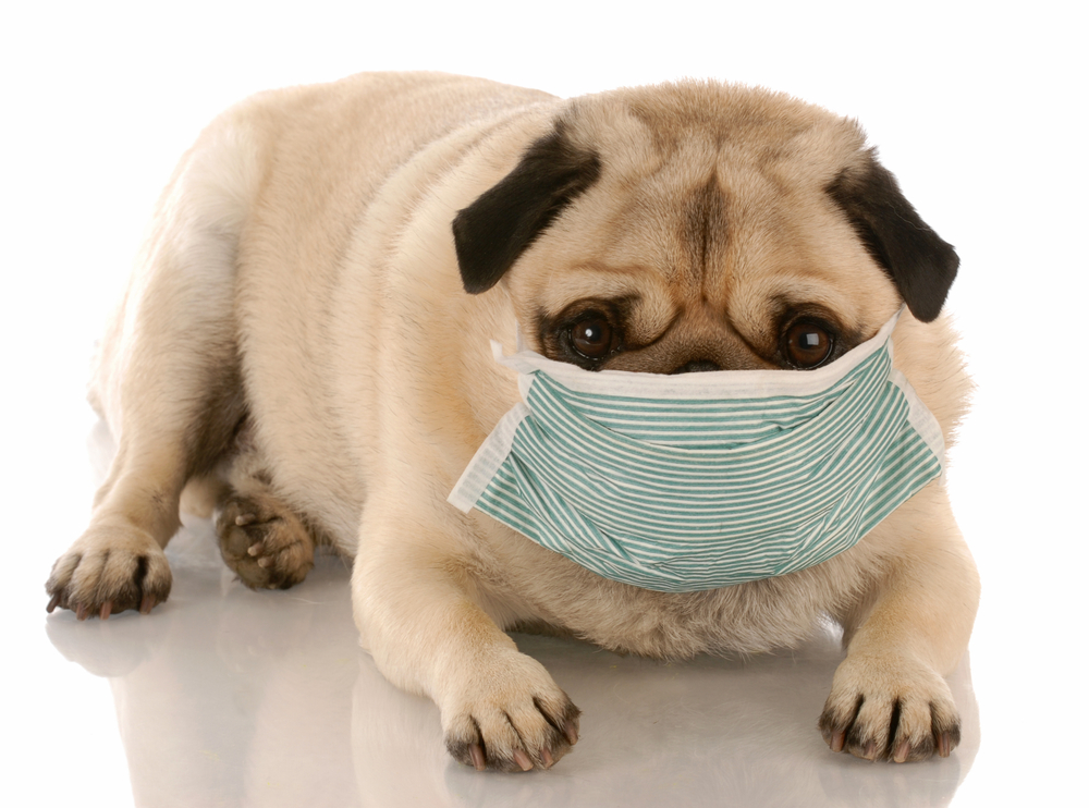 dog wearing medical mask