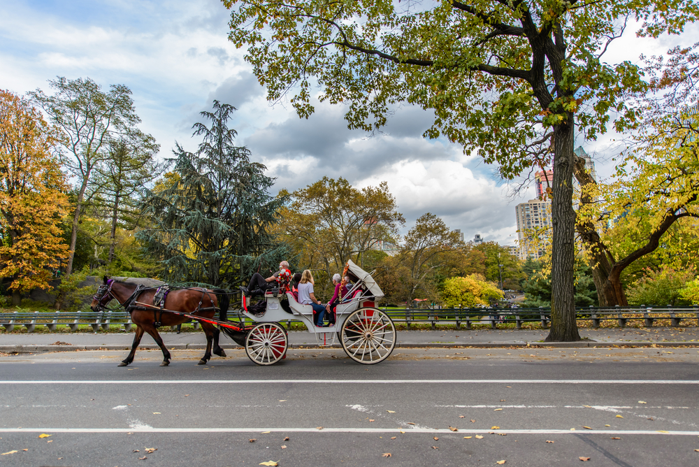 horse carriage central park