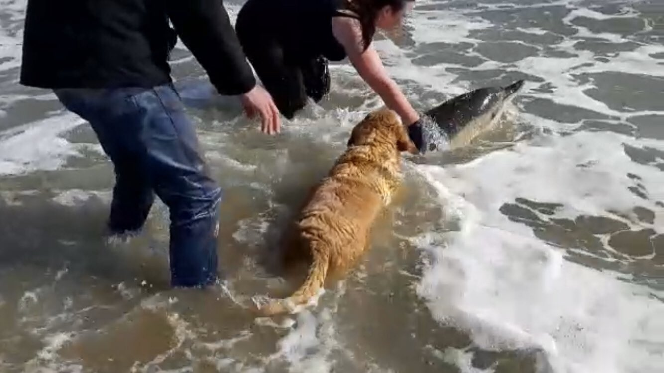 people and dog helping dolphin