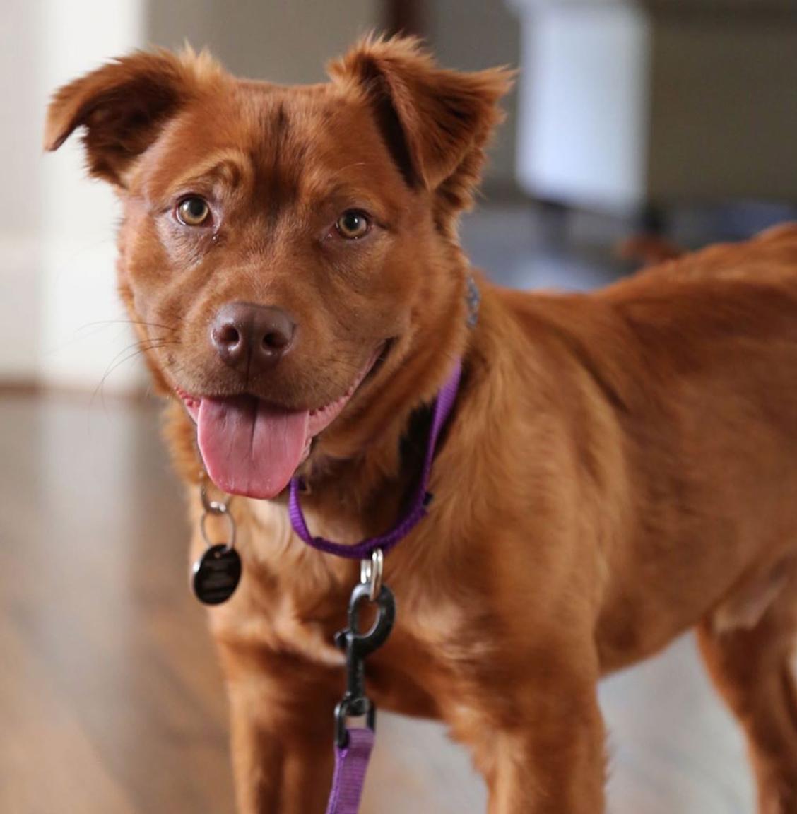 dog named after nurse
