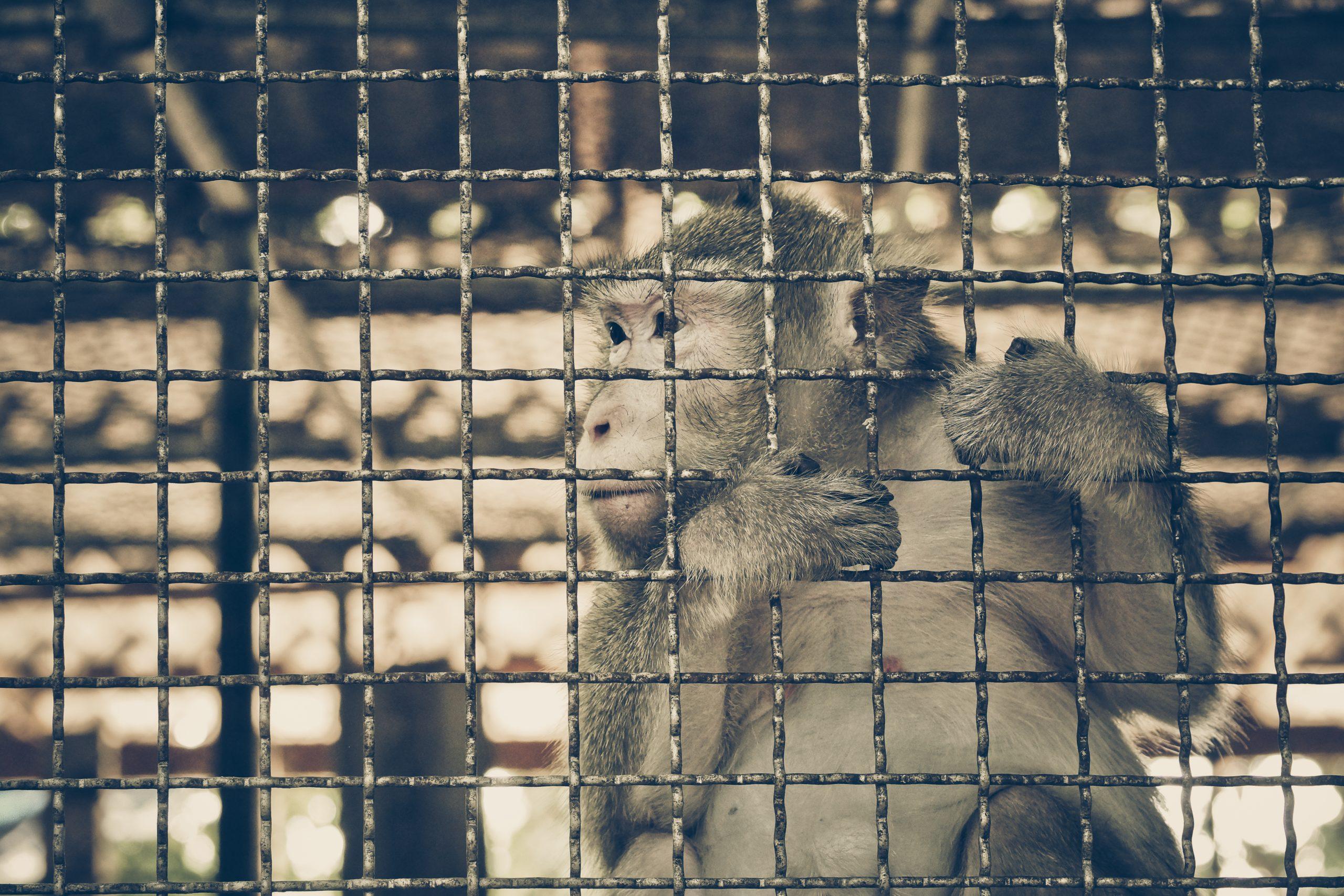 Petition: Beijing Bans Consumption of Wild Animals Due to Coronavirus