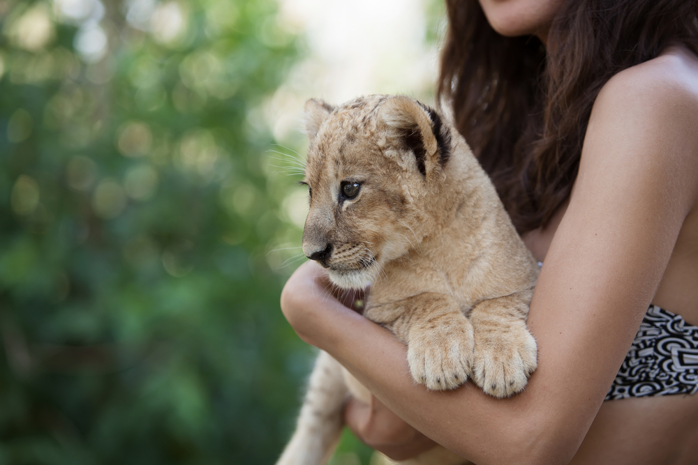 "Petition: Model Arrested for Illegally Living with ""Pet"" Lion Cub and Python"