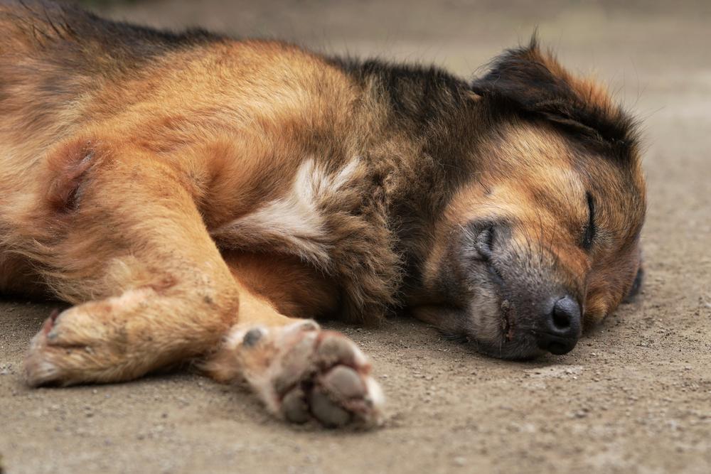 dog dog on street