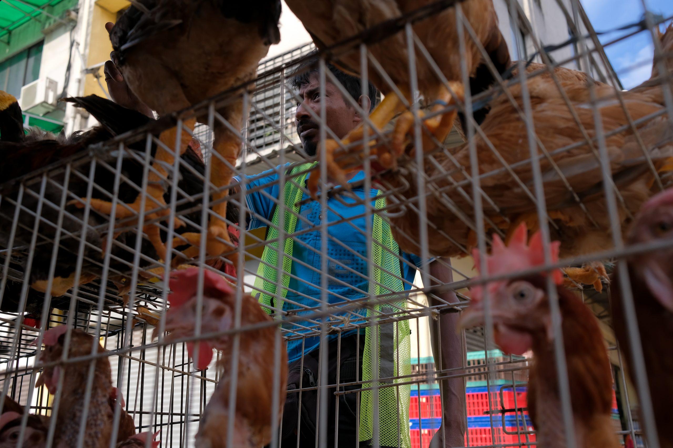 Chicken Wet Market