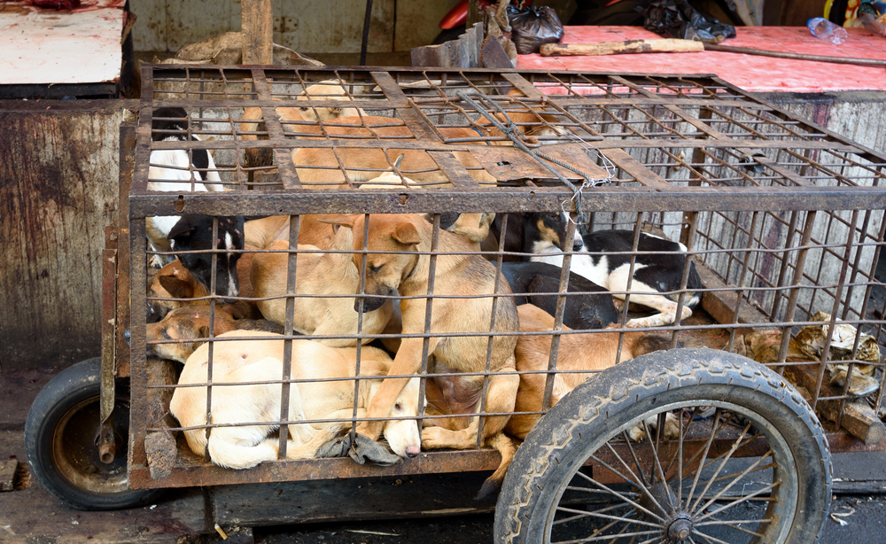 dog and cats in cages for meat