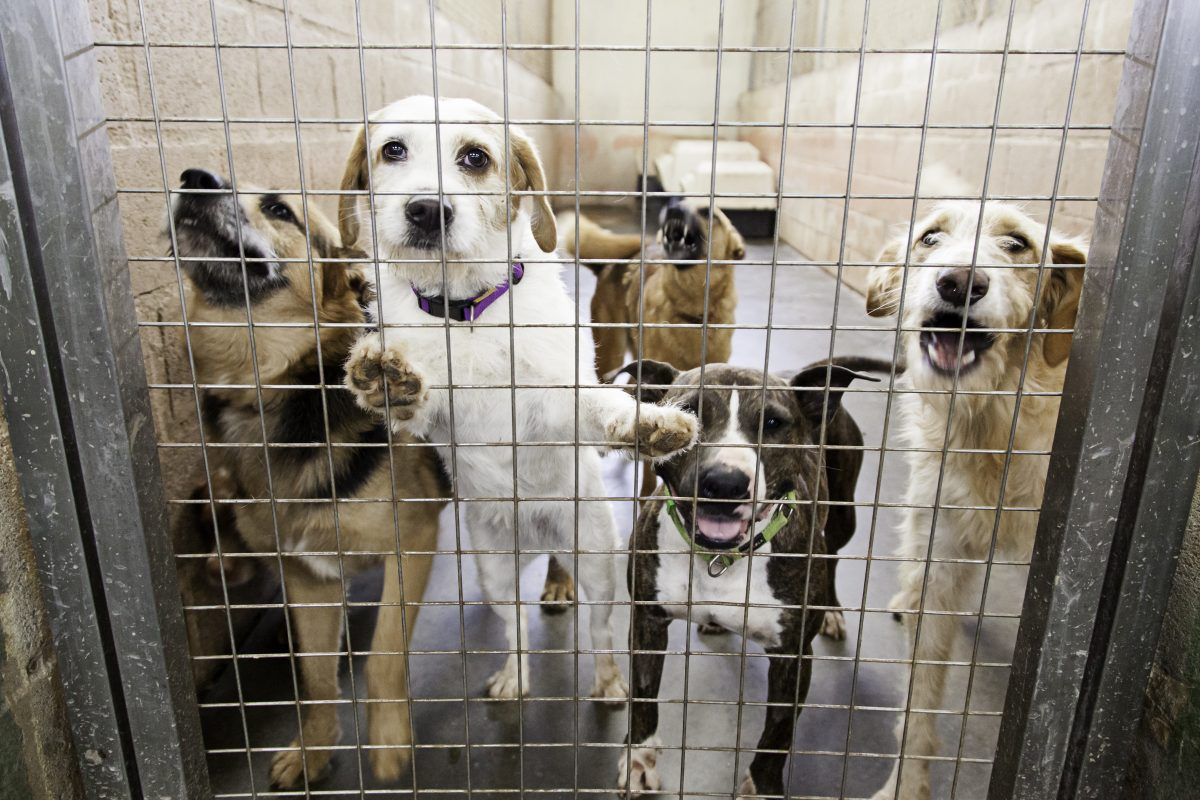 Kennel Dogs