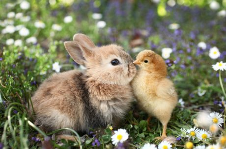 rabbit and a chick