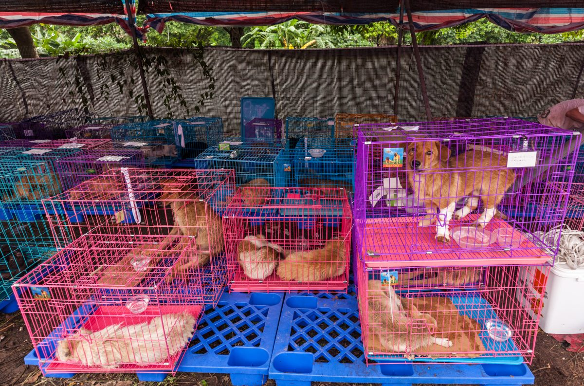 Shenzhen Becomes First City to Ban Dog and Cat Meat in China