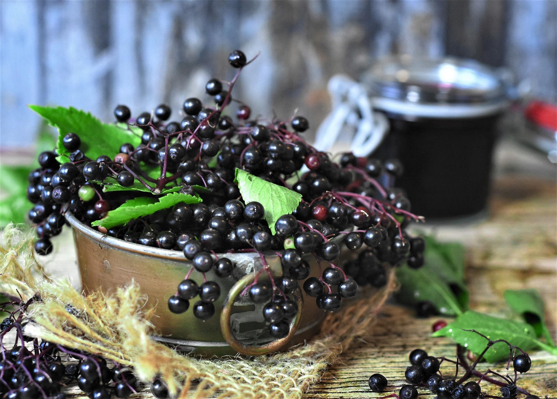 elderberry supplements