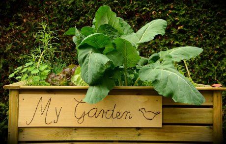 beginner veggies for home garden