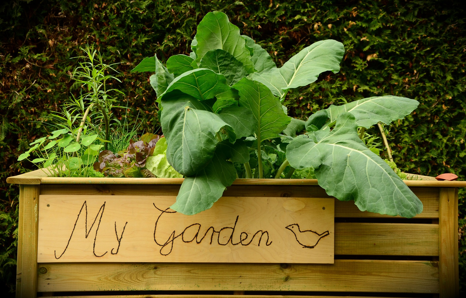 beginner veggies for home garden
