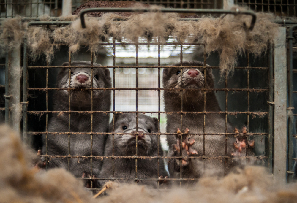 Petition: Ban Fur Farms in the U.S.