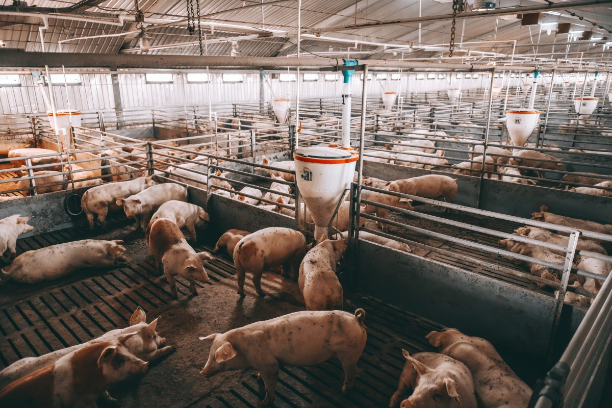 Hogs Farm