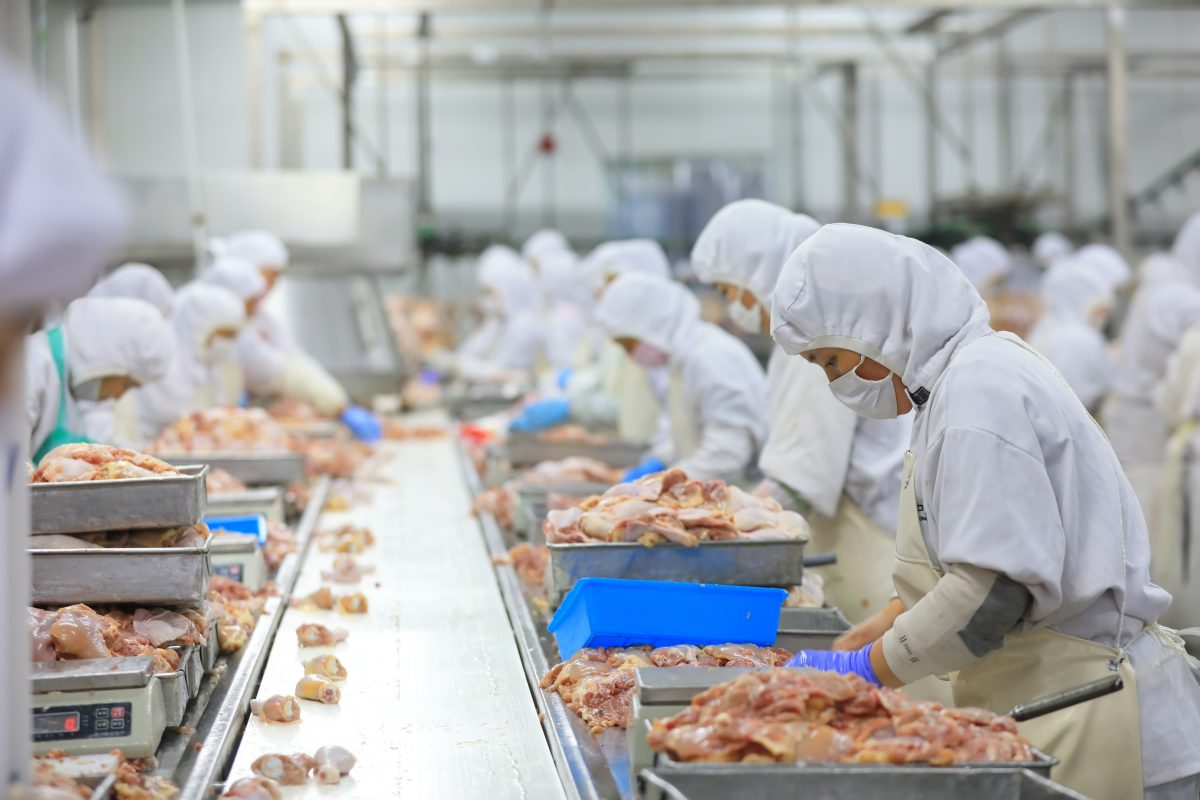Chicken Production Line