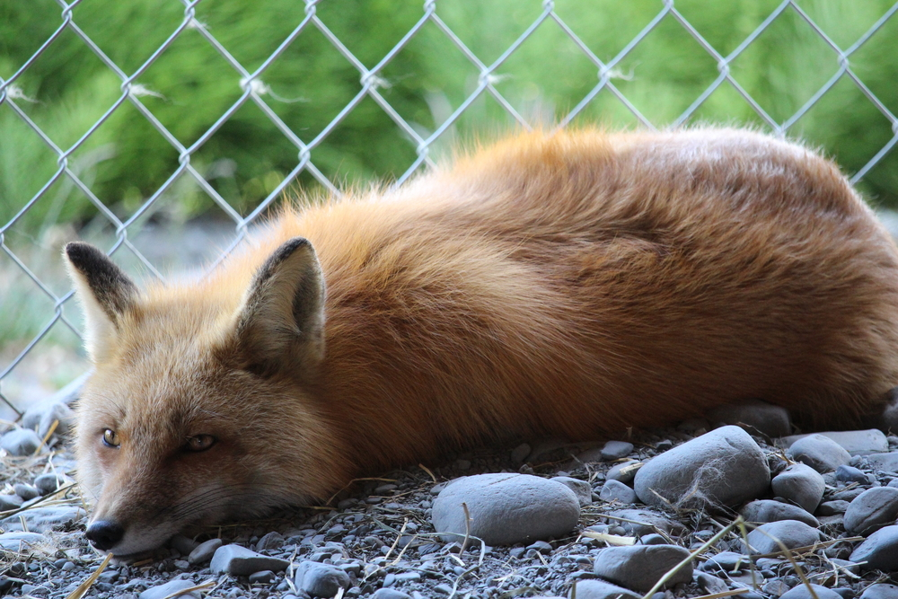 Petition: Ask Etsy to Stop Allowing the Sale of Fur