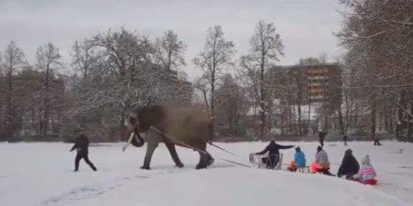 This Circus Forces Elephants to Haul People Around on Sleds