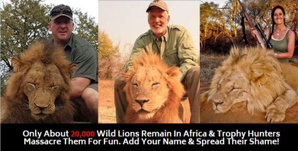 Stop Murdering Lions!
