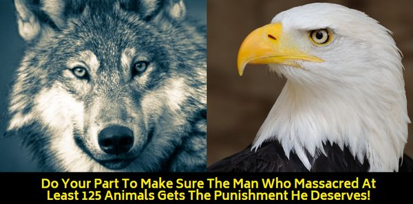 wolf and bald eagle