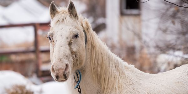 This Horse Is Suffering And Has No Voice!