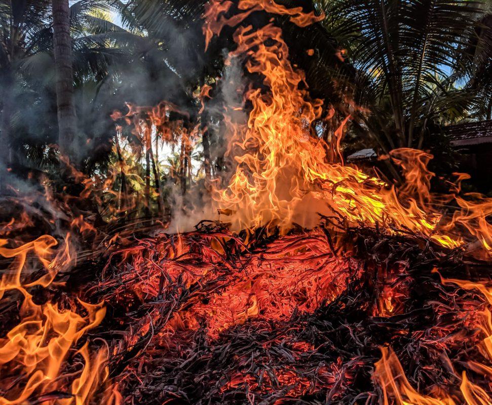 Animal agriculture is fueling rainforest destruction